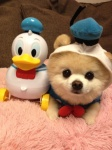 donald-duck-dog-cosplay
