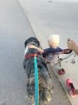 life-tough-get-dog-34 (1)