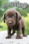 animals-dog-puppy-who-needs-hug-poster-TR6161