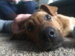lifes-ruff-get-a-dog-44