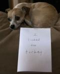 pet-confessions-33