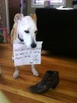 pet-confessions-5