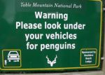vehicle-penguins-funny-sign