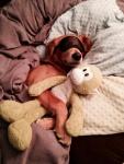 lifes-ruff-get-a-dog-3