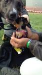 lifes-tough-dog-26