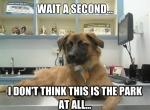 010-dog-memes