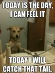 021-dog-memes