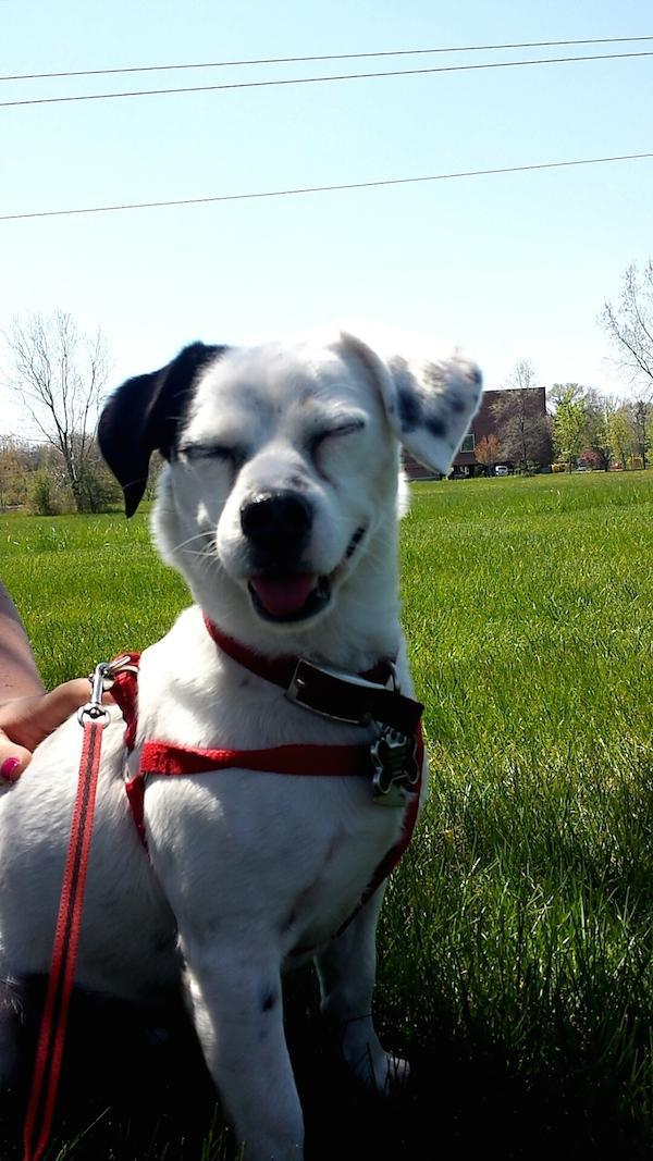 Cute Dogs To Cheer You Up Michael Bradley Time Traveler