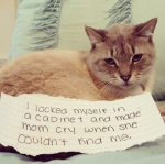 I'm a cat, I also snuck in to this dog shaming edition...