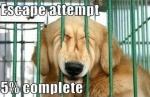 001-dog-memes