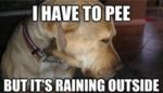 005-dog-memes
