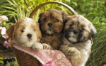 cute_puppies_2-wide