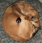 Pie shaped Dogs