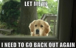 017-dog-memes - Copy