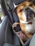 funny-dogs-violate-personal-space-19__605