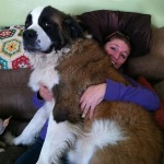 funny-dogs-violate-personal-space-29__605 - Copy