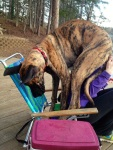 funny-dogs-violate-personal-space-52__605 - Copy