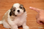 670px-Discipline-Your-Puppy-Step-2