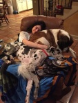 dogs-and-personal-space-will-never-exist-together-in-this-universe-32-photos-33