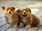 7023209-cute-puppies