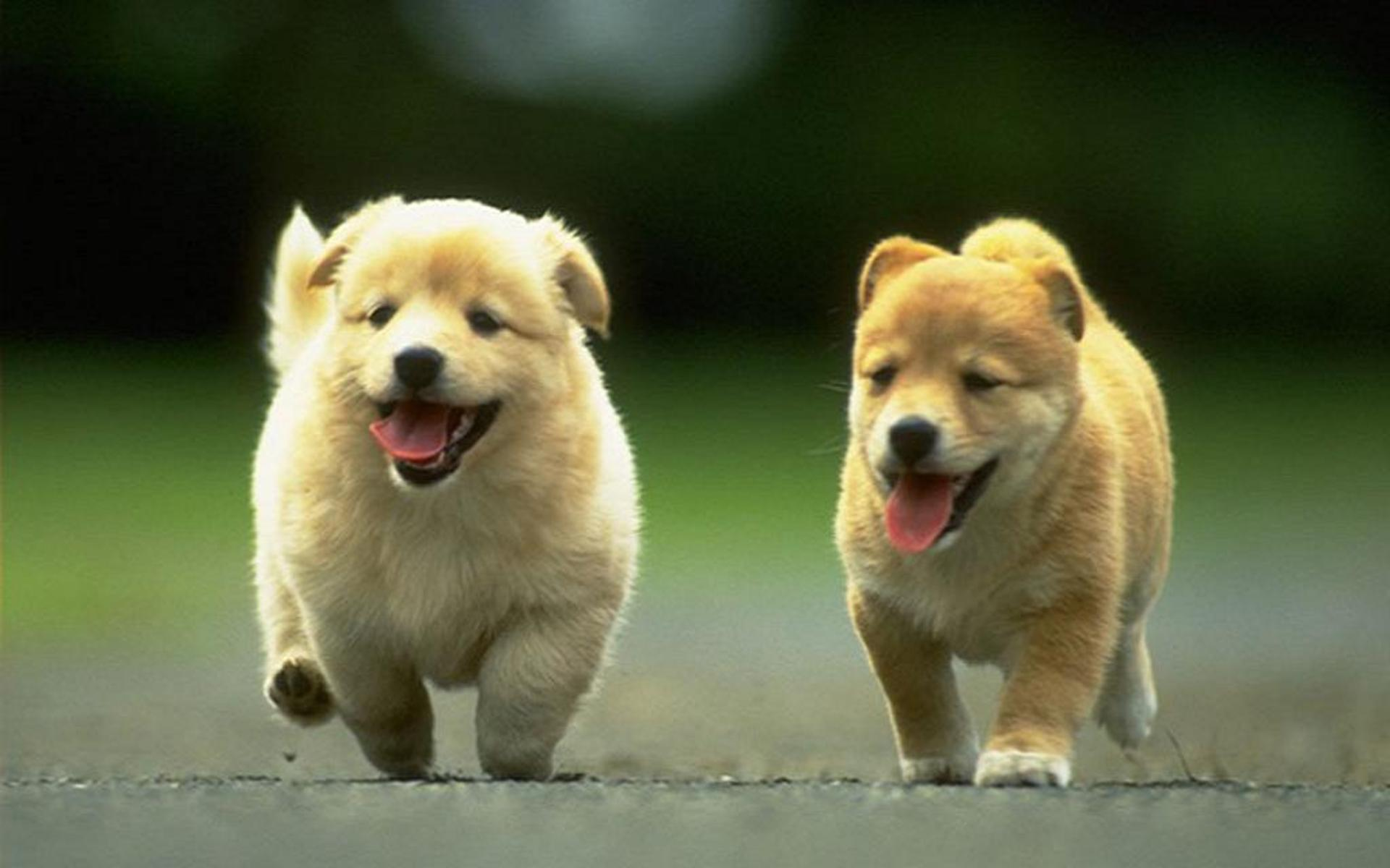 cute-couple-puppies-dogs-cub-88335 | michael bradley - time traveler