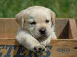 cute-dog-pictures-cute-funny-dogs-photos-imgstocks-com