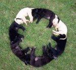 Cute-Dog7