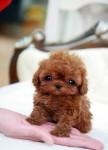 cute-doggy-432x600