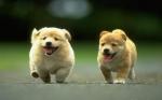 sweet-cute-dogs-jpg