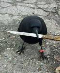 A murder of crows...