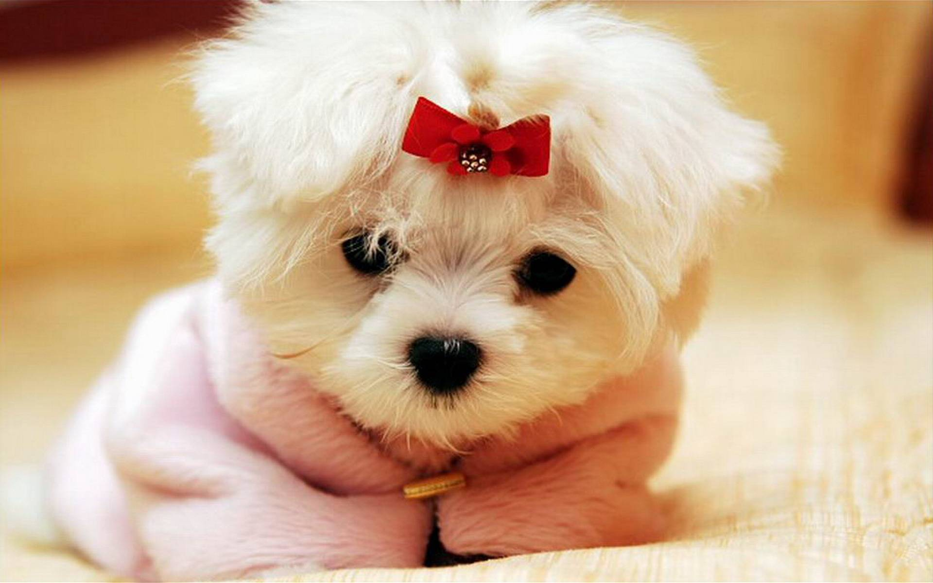 2048 cute dogs for Pictures of cute dogs
