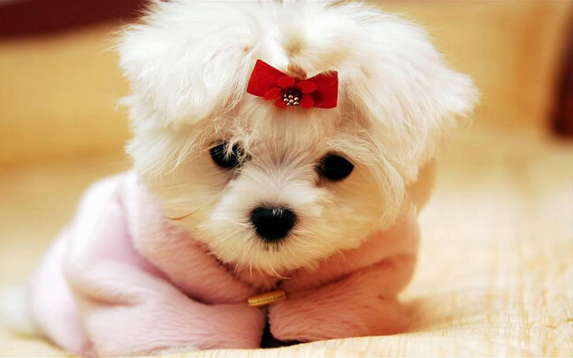 339463 dogs cute dog michael bradley   time traveler