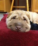 6-118985-post-the-happiest-dogs-who-show-the-best-smiles-18__700-1443547059