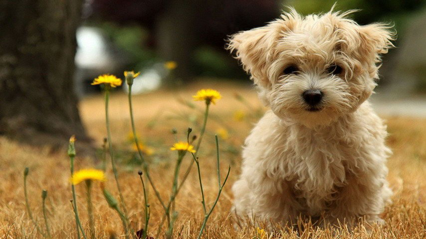 Cute Dogs Cell Phone Wallpapers 854 480 39 Michael Bradley Time