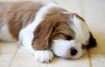 Cute-puppy-photos-192