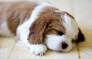 Cute-puppy-photos-192