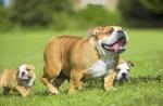 dnews-files-2015-12-dog-moms-670-jpg
