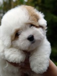 So-cute-innocent-pup
