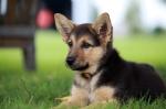 cute-dog-names-11