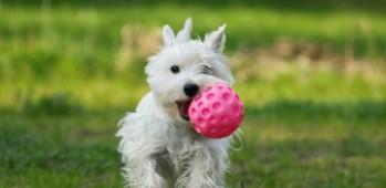 dog-and-ball-586x286