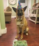 6-118989-post-the-happiest-dogs-who-show-the-best-smiles-22__700-1443547059