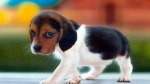sad-cute-dog-high-resolution-wallpaper-for-desktop-background-download-dog-photos-free